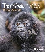 Cover-Bild zu Tierkinder 2022 - Wand-Kalender - 30x34 von teNeues Calendars