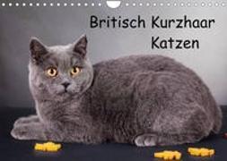 Cover-Bild zu Britisch Kurzhaar Katzen (Wandkalender 2022 DIN A4 quer) von Wejat-Zaretzke, Gabriela
