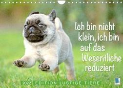 Cover-Bild zu Der Mops: Nicht klein, sondern aufs Wesentliche reduziert. Edition lustige Tiere (Wandkalender 2022 DIN A4 quer) von Calvendo