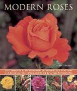 Cover-Bild zu Mikolajski, Andrew: Modern Roses