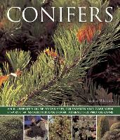 Cover-Bild zu Mikolajski, Andrew: Conifers