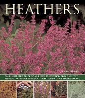Cover-Bild zu Mikolajski, Andrew: Heathers
