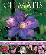 Cover-Bild zu Mikolajski, Andrew: Clematis