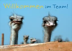 Cover-Bild zu Willkommen im Team!