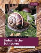 Cover-Bild zu Einheimische Schnecken von Nordsiek, Robert