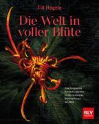 Cover-Bild zu Die Welt in voller Blüte von Hägele, Till