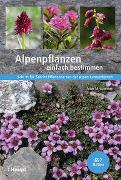 Cover-Bild zu Alpenpflanzen einfach bestimmen von Kammer, Peter M.