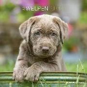 Cover-Bild zu ALPHA EDITION (Hrsg.): Welpen 2022 - Broschürenkalender 30x30 cm (30x60 geöffnet) - Kalender mit Platz für Notizen - Puppies - Bildkalender - Wandplaner - Alpha Edition