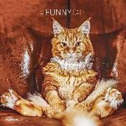 Cover-Bild zu Alpha Edition (Hrsg.): Funny Cats 2022 - Broschürenkalender 30x30 cm (30x60 geöffnet) - Kalender mit Platz für Notizen - Katzen - Bildkalender - Wandplaner - Alpha Edition
