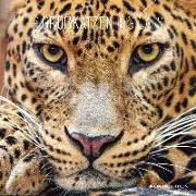 Cover-Bild zu Alpha Edition (Hrsg.): Großkatzen 2022 - Broschürenkalender 30x30 cm (30x60 geöffnet) - Kalender mit Platz für Notizen - Big Cats - Bildkalender - Wandplaner - Alpha Edition