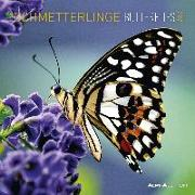 Cover-Bild zu Alpha Edition (Hrsg.): Schmetterlinge 2022 - Broschürenkalender 30x30 cm (30x60 geöffnet) - Kalender mit Platz für Notizen - Butterflies - Bildkalender - Alpha Edition