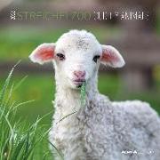 Cover-Bild zu Alpha Edition (Hrsg.): Streichelzoo 2022 - Broschürenkalender 30x30 cm (30x60 geöffnet) - Kalender mit Platz für Notizen - Cuddly Animals - Bildkalender - Alpha Edition