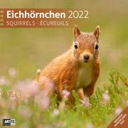Cover-Bild zu Ackermann Kunstverlag (Hrsg.): Eichhörnchen Kalender 2022 - 30x30