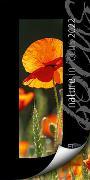 Cover-Bild zu Ackermann Kunstverlag (Hrsg.): Nature in Focus Kalender 2022