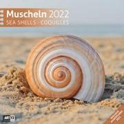 Cover-Bild zu Ackermann Kunstverlag (Hrsg.): Muscheln Kalender 2022 - 30x30