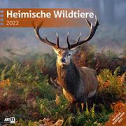 Cover-Bild zu Ackermann Kunstverlag (Hrsg.): Heimische Wildtiere Kalender 2022 - 30x30