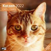 Cover-Bild zu Ackermann Kunstverlag (Hrsg.): Katzen Kalender 2022 - 30x30