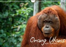 Cover-Bild zu Arndt, Attila: Orang Utans von Borneo Tierkalender 2022 (Wandkalender 2022 DIN A4 quer)