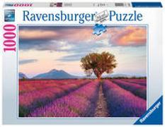 Cover-Bild zu Lavendelfeld in der goldenen Stunde