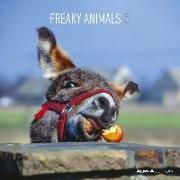 Cover-Bild zu ALPHA EDITION (Hrsg.): Freaky Animals 2022 - Broschürenkalender 30x30 cm (30x60 geöffnet) - Kalender mit Platz für Notizen - Bildkalender - Wandplaner - Alpha Edition