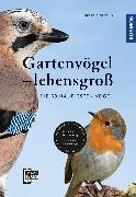 Cover-Bild zu Gartenvögel lebensgroß (eBook) von Strauß, Daniela