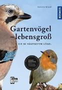 Cover-Bild zu Gartenvögel lebensgroß von Strauß, Daniela