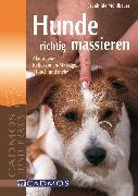 Cover-Bild zu Mühlbauer, Brunhilde: Hunde richtig massieren (eBook)