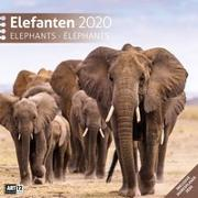 Cover-Bild zu Elefanten 2020 von Ackermann Kunstverlag (Hrsg.)