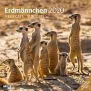 Cover-Bild zu Erdmännchen 2020 von Ackermann Kunstverlag (Hrsg.)