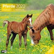 Cover-Bild zu Pferde 2020 von Ackermann Kunstverlag (Hrsg.)