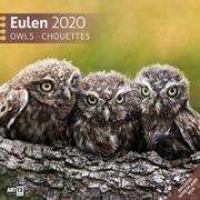 Cover-Bild zu Eulen 2020 von Ackermann Kunstverlag (Hrsg.)