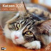 Cover-Bild zu Katzen 2020 von Ackermann Kunstverlag (Hrsg.)