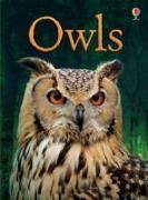 Cover-Bild zu Bone, Emily: Owls