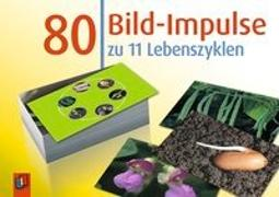 Cover-Bild zu 80 Bild-Impulse: 11 Lebenszyklen von Creative Teaching Press Inc.