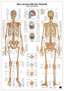 Cover-Bild zu Das menschliche Skelett von Busse, Andreas