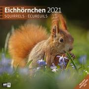 Cover-Bild zu Eichhörnchen Kalender 2021 - 30x30 von Ackermann Kunstverlag (Hrsg.)