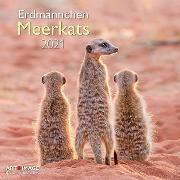 Cover-Bild zu Meerkats 2021 A&I INT