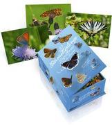 Cover-Bild zu Postkartenbox 100 Schmetterlinge der Schweiz von Wymann, Hans-Peter