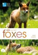 Cover-Bild zu RSPB Spotlight: Foxes (eBook) von Unwin, Mike