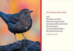 Cover-Bild zu Eschbacher Textkarte. Amsel