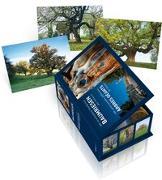 Cover-Bild zu Postkartenbox Baumriesen der Schweiz