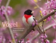 Cover-Bild zu Vögel - Faszinierende Artenvielfalt Kalender 2021 von Ackermann Kunstverlag (Hrsg.)