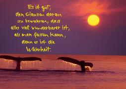 Cover-Bild zu Eschbach Grusskarten B6. Wale