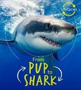 Cover-Bild zu Lifecycles - Pup To Shark (eBook) von De La Bedoyere, Camilla