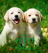 Cover-Bild zu Lifecycles - Pup To Dog von de la Bedoyere, Camilla