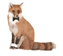 Cover-Bild zu Viggers, Katie: Animal ABC
