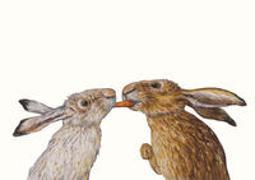 Cover-Bild zu Karottenkuss Postkarte VE 1=10 von Schärer, Kathrin