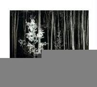Cover-Bild zu Ansel Adams at 100 von Szarkowski, John