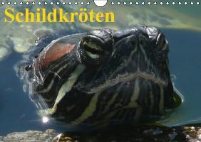 Cover-Bild zu Stanzer, Elisabeth: Schildkröten (Wandkalender immerwährend DIN A4 quer)