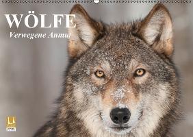Cover-Bild zu Stanzer, Elisabeth: Wölfe. Verwegene Anmut (Wandkalender immerwährend DIN A2 quer)
